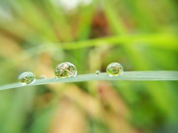 【摄影达人·X5max S】晶莹雨珠