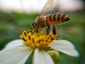 【发现生活之美】勤劳的蜜蜂