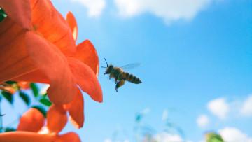 【摄影达人·Xshot】蜂·蛛·蚁