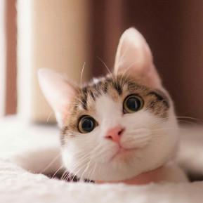 我就看着你
