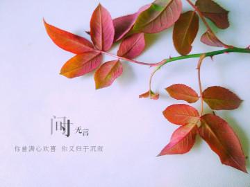 【秋之味】不言不语都是好风景