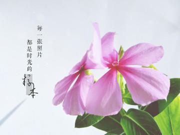 【摄影达人·X7】遇见花开