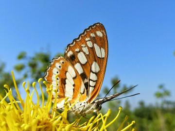 【摄影达人·X9】蝴蝶之梦