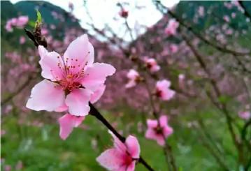 你若盛开,一定是春天到来