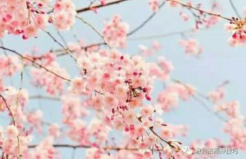 【摄影教程】春天各种花卉的拍摄技巧
