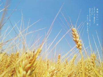 【摄影达人·vivox6D】麦子熟了