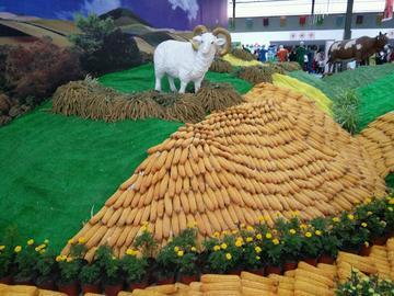农产品展览