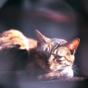 阳光下安静的猫