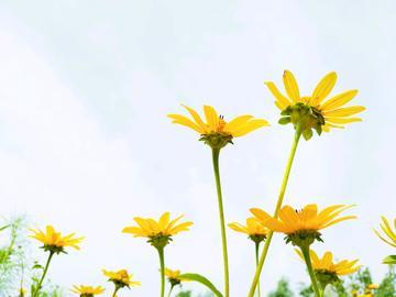 【摄影达人·X9s】北湖的花