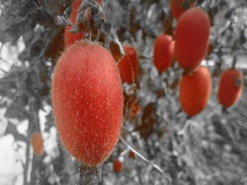 #发现生活之美# 冬日不一样的红