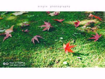 十二月摄影精选(一) |世界很美,而你正好有空。
