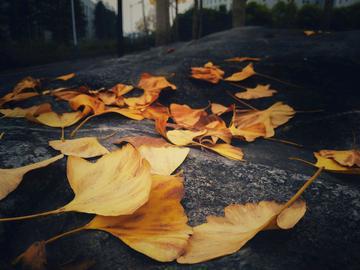 冬天的落叶