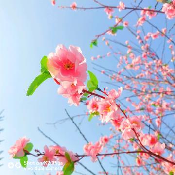 【摄影达人·X20Plus】一树暖色