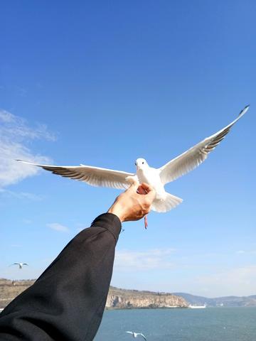 来自西伯利亚的鸟🐤