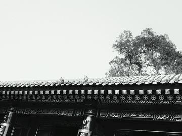 【X7PIUS摄】【广仁寺】随影(二)