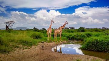vivo X6手机在非洲拍野生动物