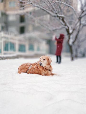 【X20手机摄影】雪中汪星人