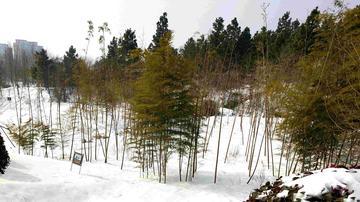 【随手拍雪景】冬的足迹