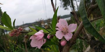 春暖花开时节