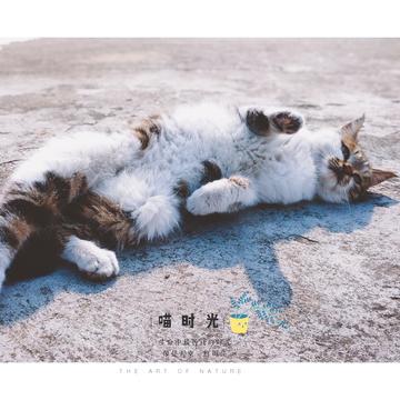 【摄影达人·X20Plus】喵猫