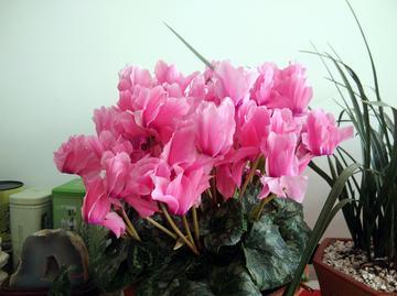 【春节随手拍】我们的世界 春暖花开