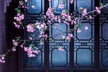 【摄影教程】拍花,别忽略了中国元素,拍好了超有味