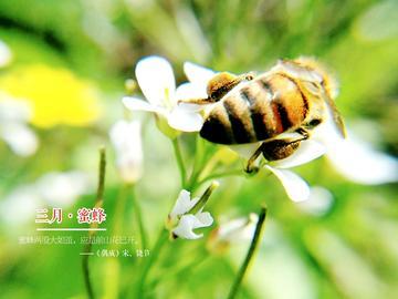 【初春记】三月·蜜蜂日记