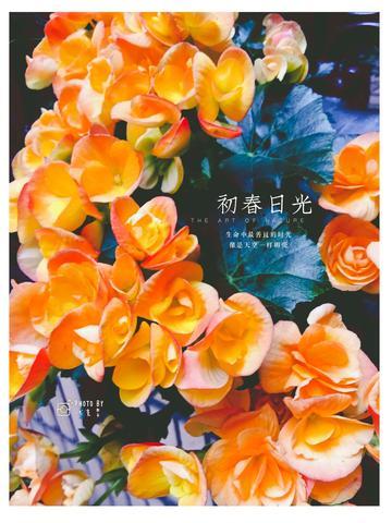 【初春记】长寿花的春容