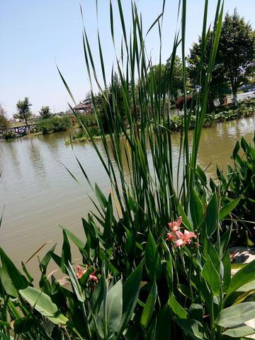 三月的白云湖