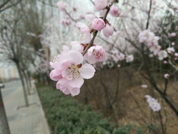 【初春记】春天的气息
