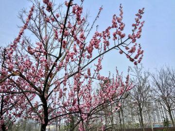 【初春记】清泉河畔  春意盎然
