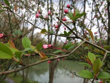 西溪湿地,3月寻梅