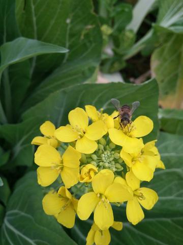 小呀小蜜蜂