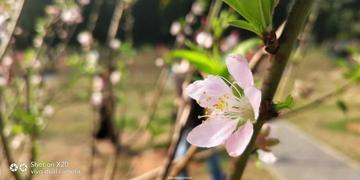 【教程分享】春天拍花,学会这几招让你的作品与众不同