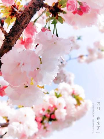 【初春记】春天来了