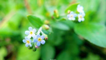 【教程分享】春天来了,学点花卉构图技能很重要