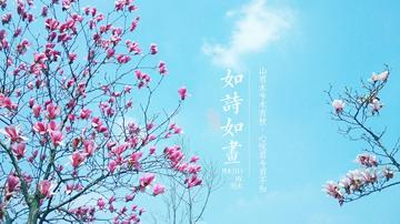 四月摄影精选(二)希望前路,平安喜乐