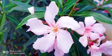 【初春记】鲜艳的开花