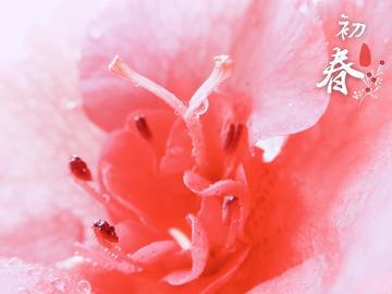 【vivo x9s】杜鹃花的美③