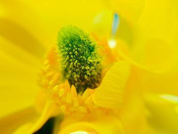 【初春记】vivo X21微距下的春之花