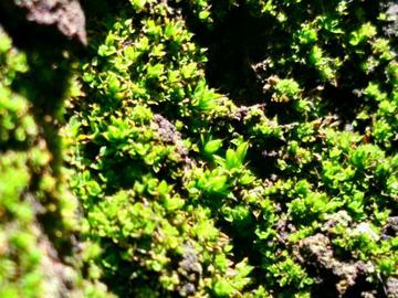 【V3Max A】春之绿