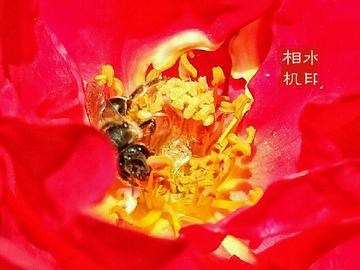 【X7PIUS】工作中的小蜜蜂