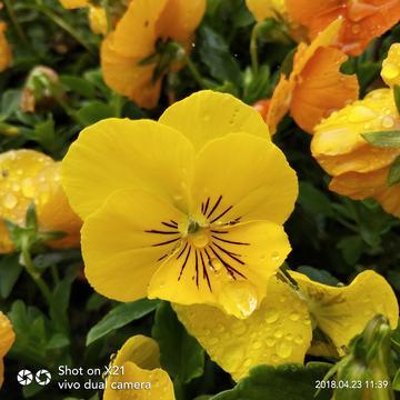 【X21】『那些花儿』