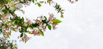 【X21】花开花落