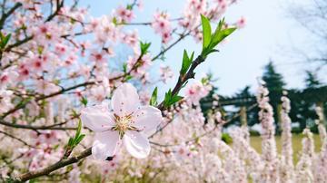 【2018春季摄影精选】-------花卉篇Ⅰ