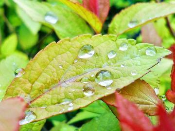 【Y33】~雨珠