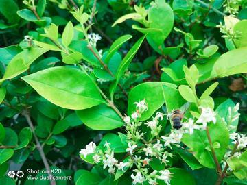 花儿&蜜蜂✔