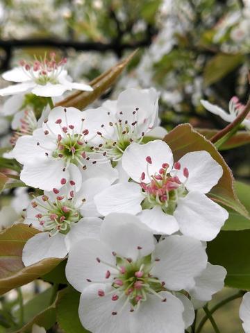 花∠※之语