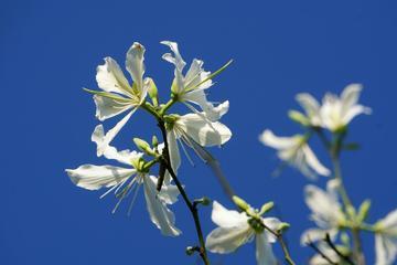 春天里的花朵