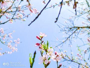这个春天,X21拍下的那些花儿